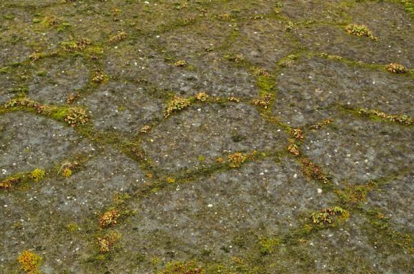 Hexagonale strukturer i grusen, med mose